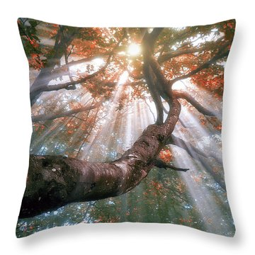 Forest With Fog And Sun Rays Throw Pillow