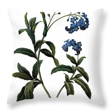 Forget-me-not Throw Pillow by Granger