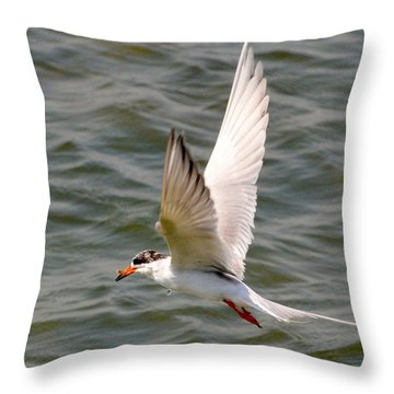 Forster's Tern With Minnow Throw Pillow by Dan Williams
