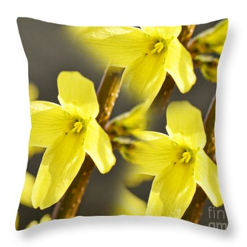Forsythia Three Throw Pillow by Traci Cottingham