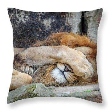 Fort Worth Zoo Sleepy Lion Throw Pillow