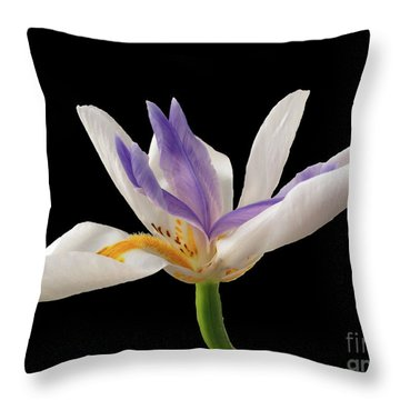 Fortnight Lily On Black Throw Pillow