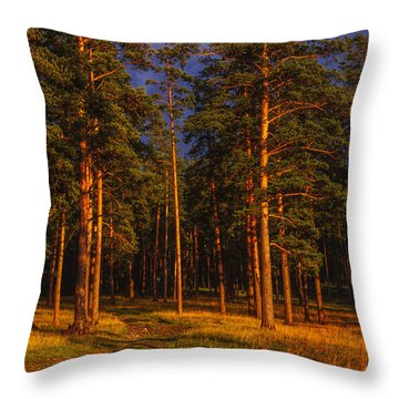 Throw Pillow featuring the photograph Forest After Rain Storm by Vladimir Kholostykh