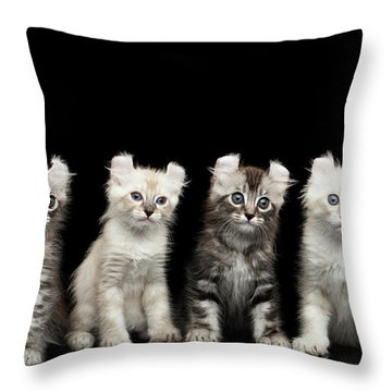 Four American Curl Kittens With Twisted Ears Isolated Black Background Throw Pillow