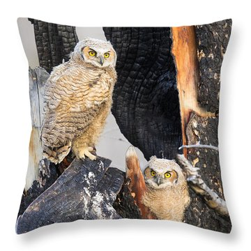 Four Eyes Throw Pillow by Aaron Whittemore