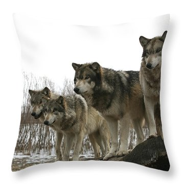Throw Pillow featuring the photograph Four Pack by Shari Jardina