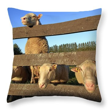 Four Sheep At A Fence Throw Pillow