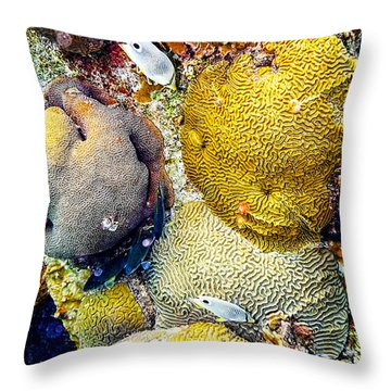 Throw Pillow featuring the photograph Foureye Butterflyfish by Perla Copernik