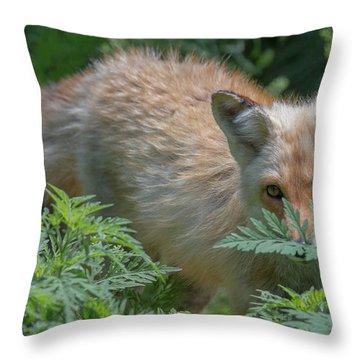 Fox In The Ferns Throw Pillow