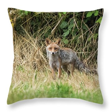 Fox In The Woods Throw Pillow