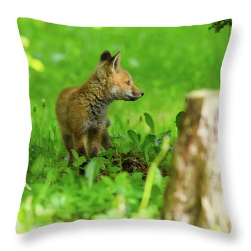 Fox Kit - 2 Throw Pillow
