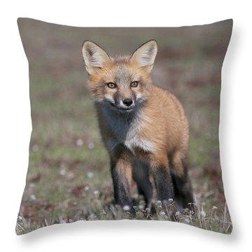 Throw Pillow featuring the photograph Fox Kit by Elvira Butler