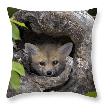 Fox Kit In Log Throw Pillow