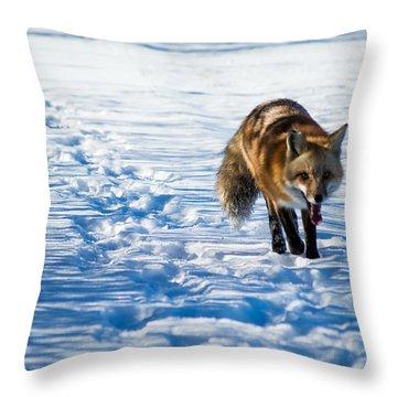 Fox Path Throw Pillow