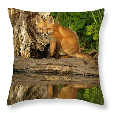 Fox Reflection Throw Pillow by James Peterson