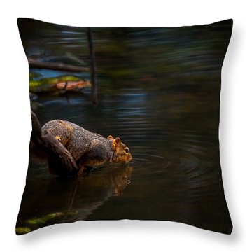 Fox Squirrel Drinking Throw Pillow
