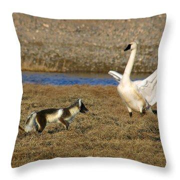Fox Vs Tundra Swan Throw Pillow