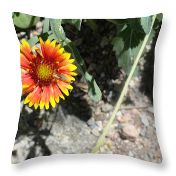 Fragile Floral Life On The Trail Throw Pillow