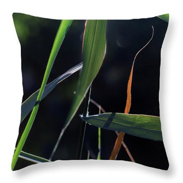 Throw Pillow featuring the photograph Fragment by Linda Lees