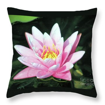 Frail Beauty - A Water Lily Throw Pillow