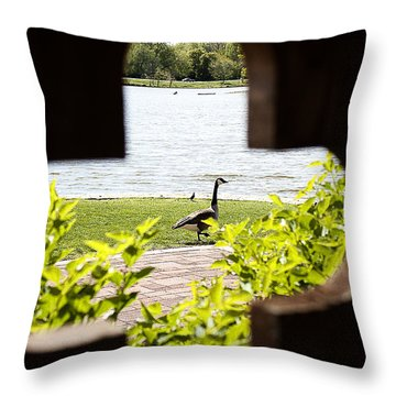 Framed Nature Throw Pillow