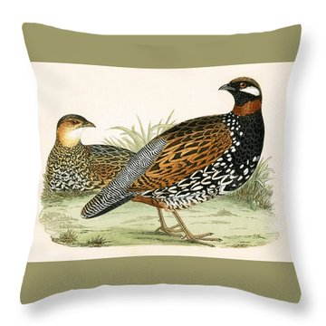 Francolin Throw Pillow by English School
