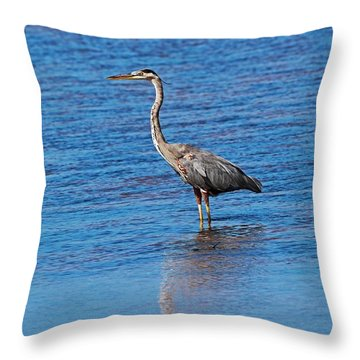 Throw Pillow featuring the photograph Free Spirit by Michiale Schneider