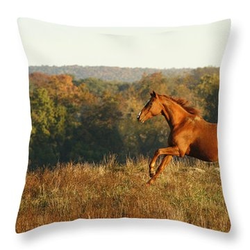 Freedom In The Late Afternoon Throw Pillow