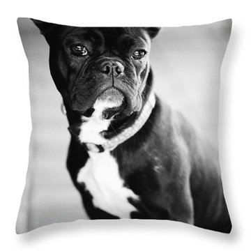 Hund Throw Pillows