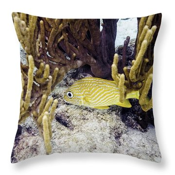Throw Pillow featuring the photograph French Grunt Swimming by Perla Copernik