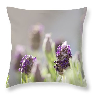 French Lavendar Buds Throw Pillow
