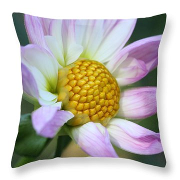Fresh As A Dahlia Throw Pillow