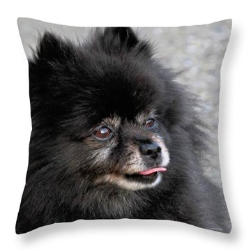 Throw Pillow featuring the photograph Fresh Dog by Debbie Stahre