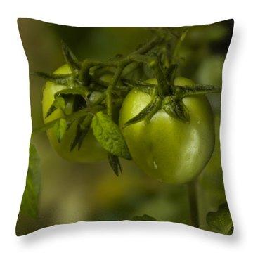 Fresh Tomato Throw Pillow by Ramabhadran Thirupattur