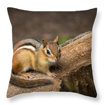 Throw Pillow featuring the photograph Friendly Chipmunk by Paul Miller
