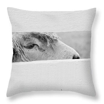 Friendly Sheep Throw Pillow