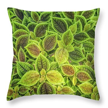 Friendship Plant Throw Pillow