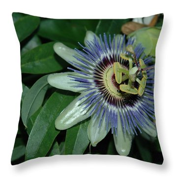 Fringed Color Throw Pillow