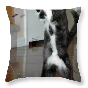 Frisbee Cat Throw Pillow