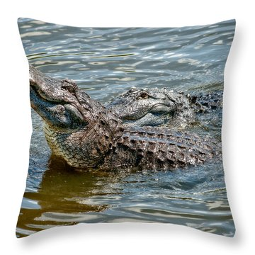 Throw Pillow featuring the photograph Frisky In Florida by Christopher Holmes