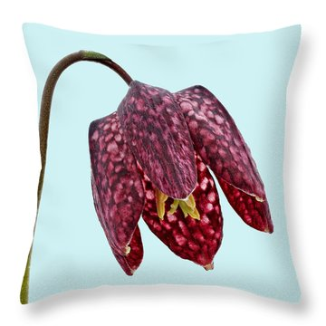 Throw Pillow featuring the photograph Fritillaria Meleagris - Blue Background by Paul Gulliver