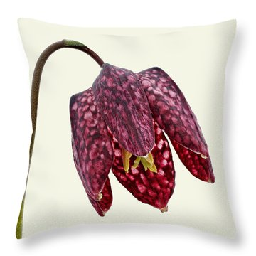 Throw Pillow featuring the photograph Fritillaria Meleagris - Cream Background by Paul Gulliver