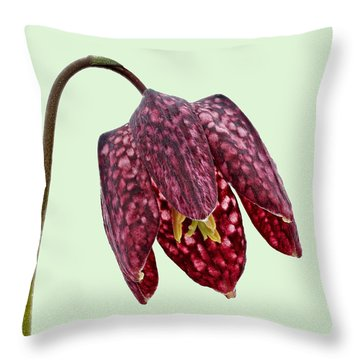 Throw Pillow featuring the photograph Fritillaria Meleagris - Green Background by Paul Gulliver