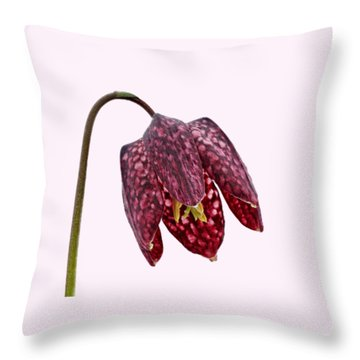 Throw Pillow featuring the photograph Fritillaria Meleagris Transparent Background by Paul Gulliver