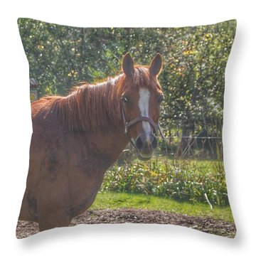 1010 - Froede Roads' Chestnut Brown Throw Pillow
