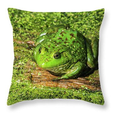 Frog And Duck Weed Throw Pillow by Edward Peterson