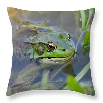 Frog Hiding In The Pond Throw Pillow by Lisa DiFruscio