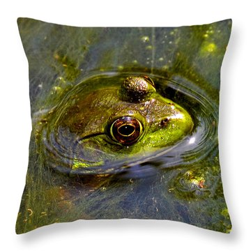 Frog In A Stream 003 Throw Pillow