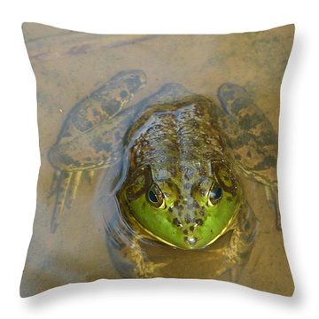 Frog Of Lake Redman Throw Pillow by Donald C Morgan