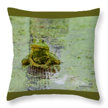 Frog On A Plank Throw Pillow by Edward Peterson